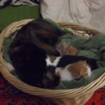 kittens and basket