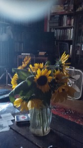 sunflowers from my garden