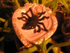 craig's spider