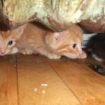 kittens under the radiator